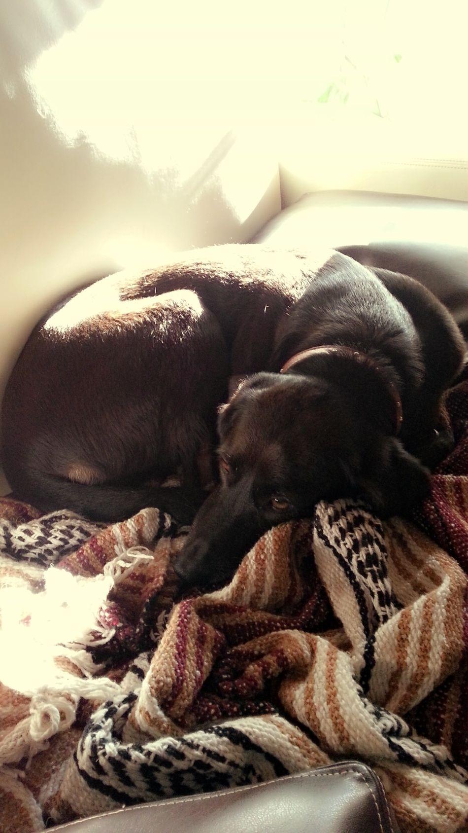 Este es mi sillón y mi mantita.. Está claro? Dogs A Dogs Life