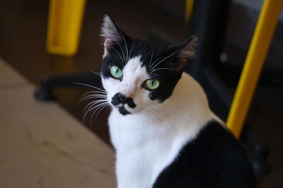 Beautiful stock photos of schnurrbart, Animal Themes, Black Color, Cat, Close-Up