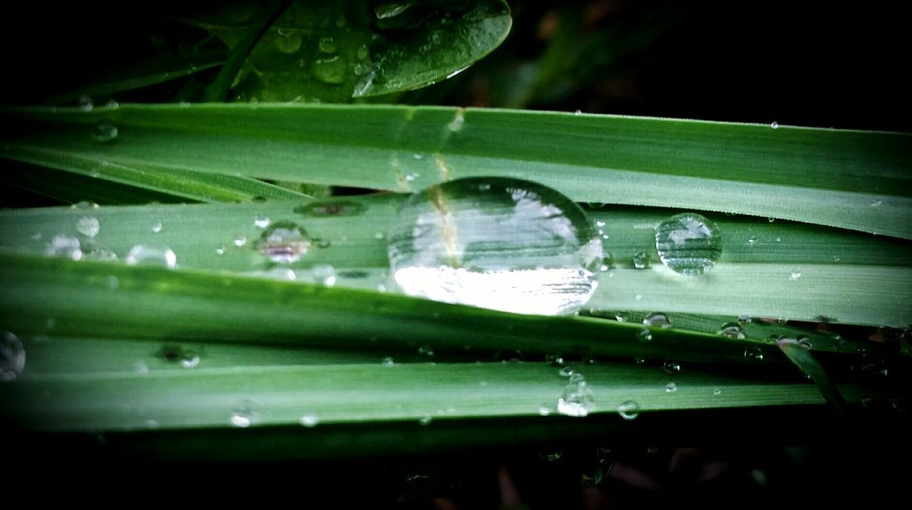 RainDrop Macro Photography Nature Is Amazing Little Diamond Waterdrops Macro_collection Natureart