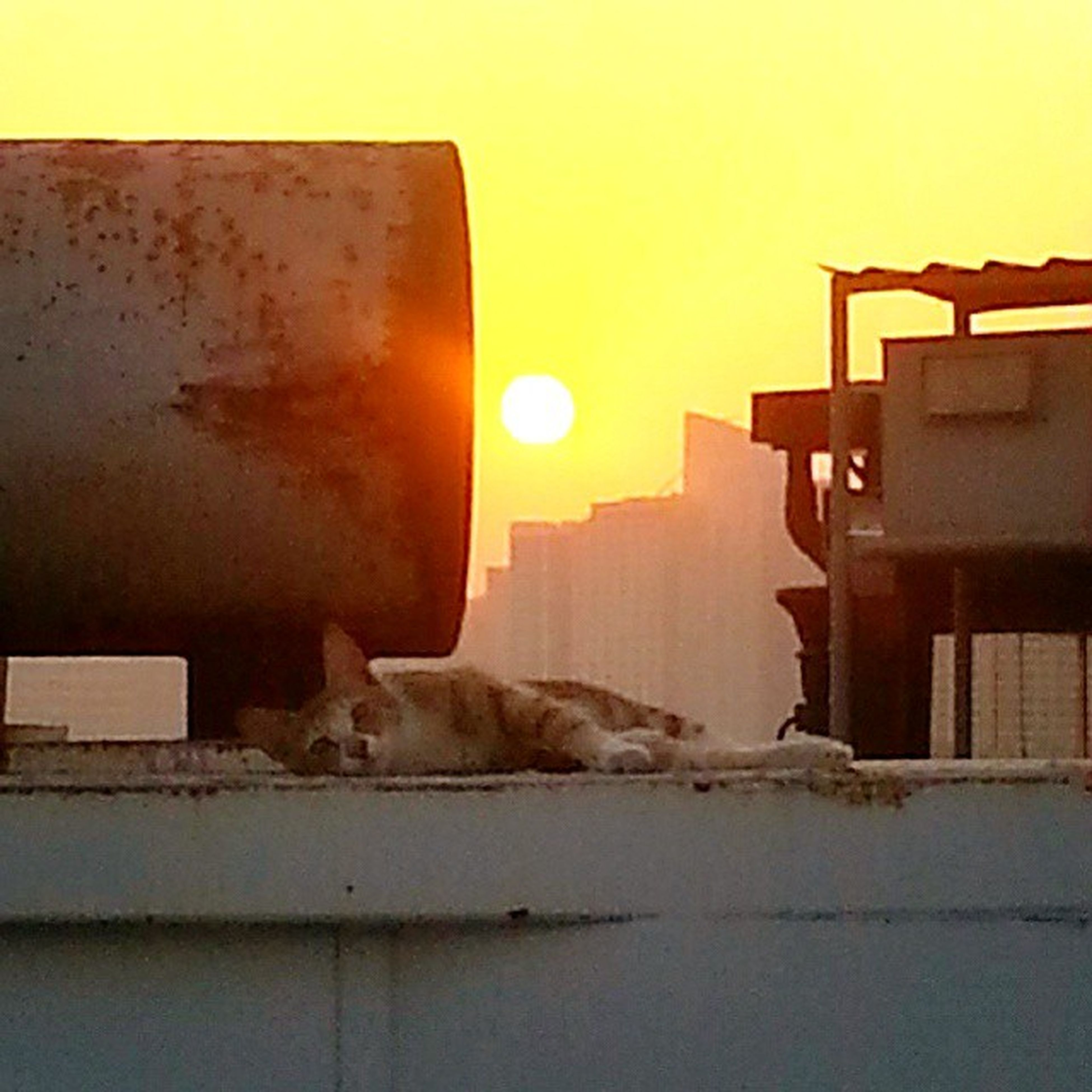 animal themes, domestic animals, one animal, pets, mammal, sunset, built structure, relaxation, architecture, dog, building exterior, house, domestic cat, resting, cat, lying down, clear sky, sitting, orange color, feline