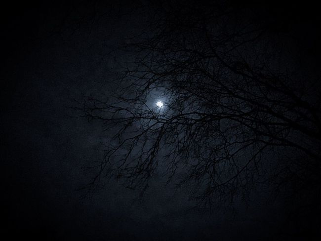 Moon Night Full Moon Branch Bare Tree Astronomy Nature Moonlight No People Sky Silhouette Beauty In Nature Scenics Dark Outdoors Low Angle View Planetary Moon Half Moon Your Ticket To Europe If Trees Could Speak The Week On EyeEm