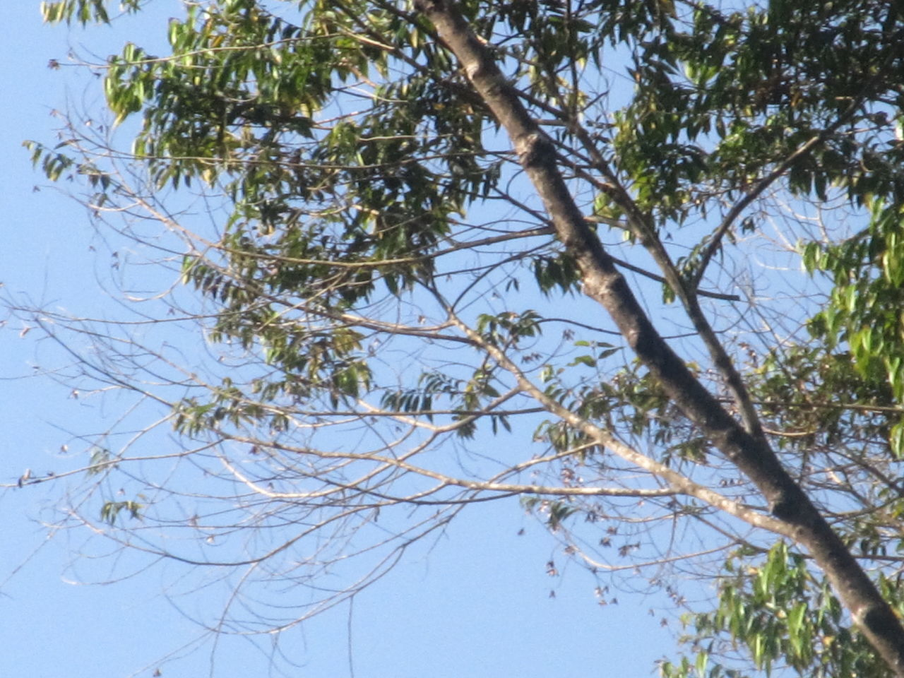 tree, low angle view, branch, nature, day, no people, beauty in nature, outdoors, sky, growth, clear sky, animal themes, freshness