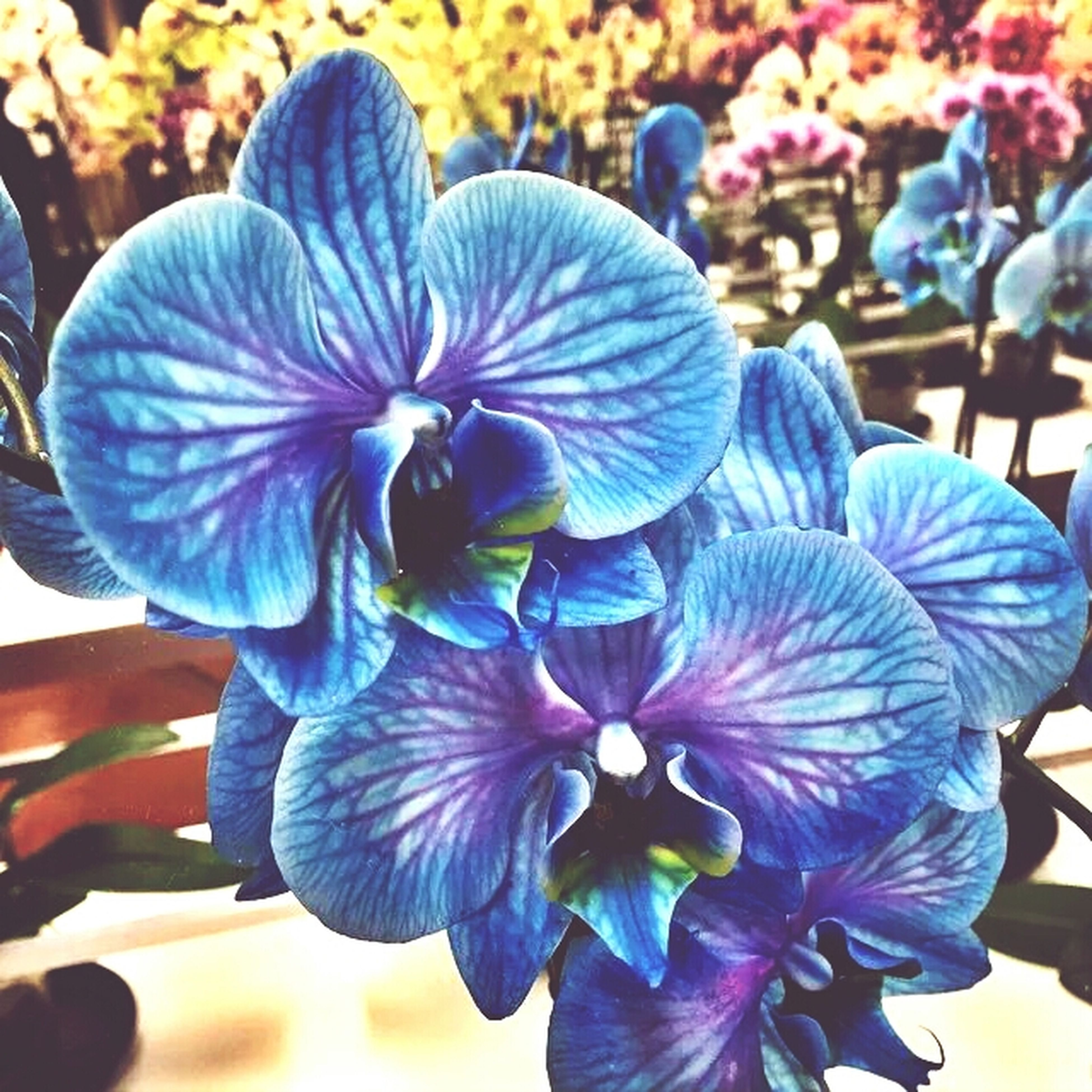 flower, petal, flower head, freshness, fragility, purple, growth, beauty in nature, close-up, blooming, nature, blue, plant, focus on foreground, in bloom, orchid, blossom, stamen, pollen, day