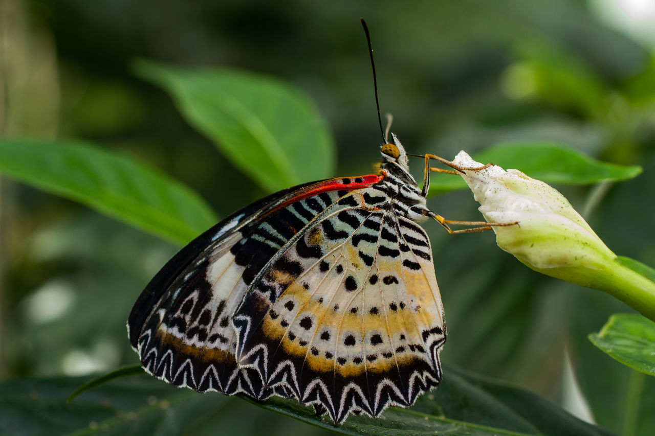 Beautiful stock photos of insects, Animal Themes, Animals In The Wild, Beauty In Nature, Butterfly