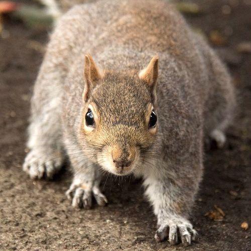 Come at me bro! Squirrel Singletonpark Swansea
