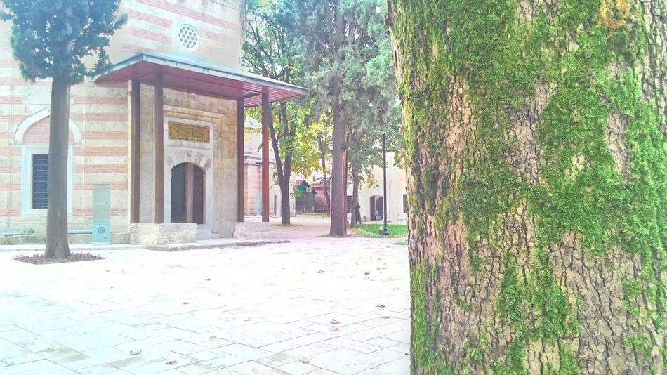 Turkey Green No People Museum Calm Story Depth Of Field Tree