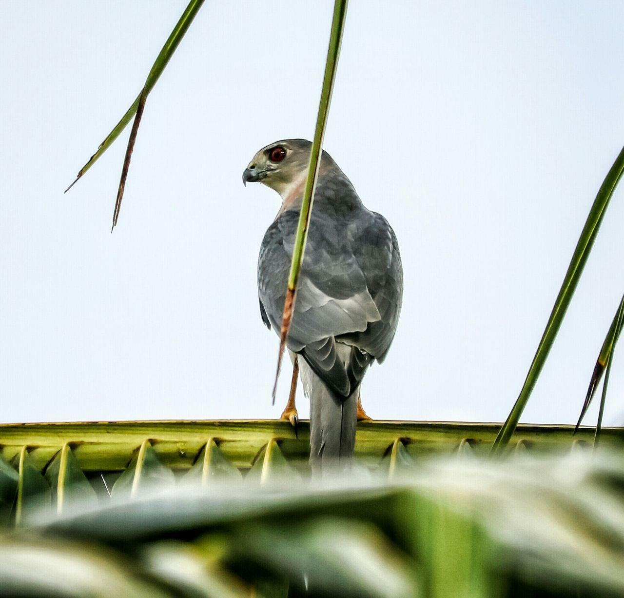 Beautiful stock photos of birds, Animal Themes, Animal Wildlife, Animals In The Wild, Bird