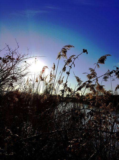 Silhouette Nature Sunset Sky Water Lago EyeEm Gallery Outdoors EyeEm Best Shots - Nature EyeEm Nature Lover EyeEm Best Shots Feel The Journey, Disegnare Con La Luce Mattina Presto No People