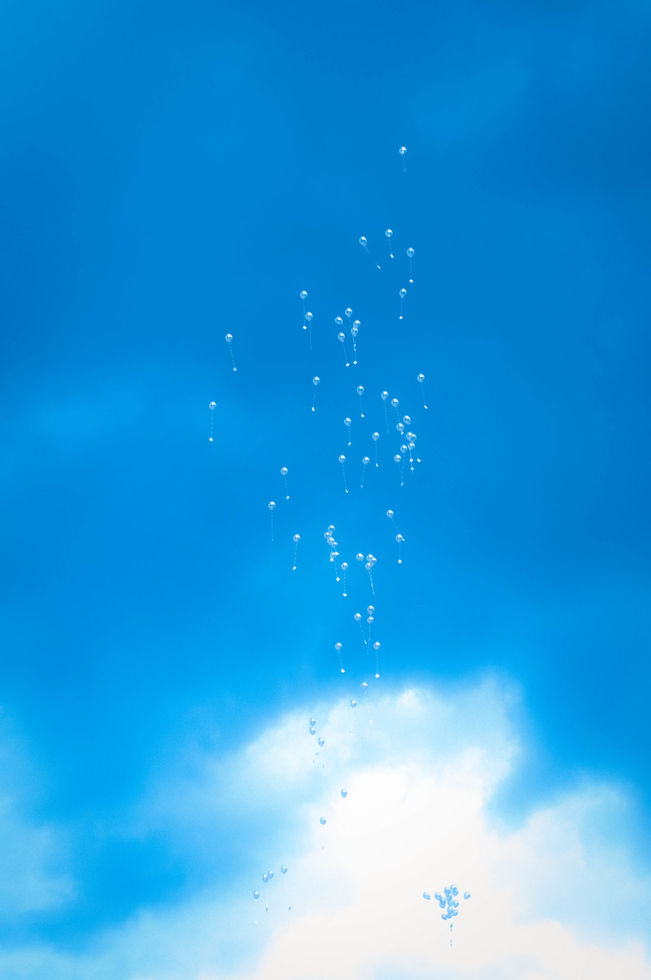 Balloons Blue Sky Celebration Close-up Cloudes Day Flowers Fred No People No People, No Poieo Wedding