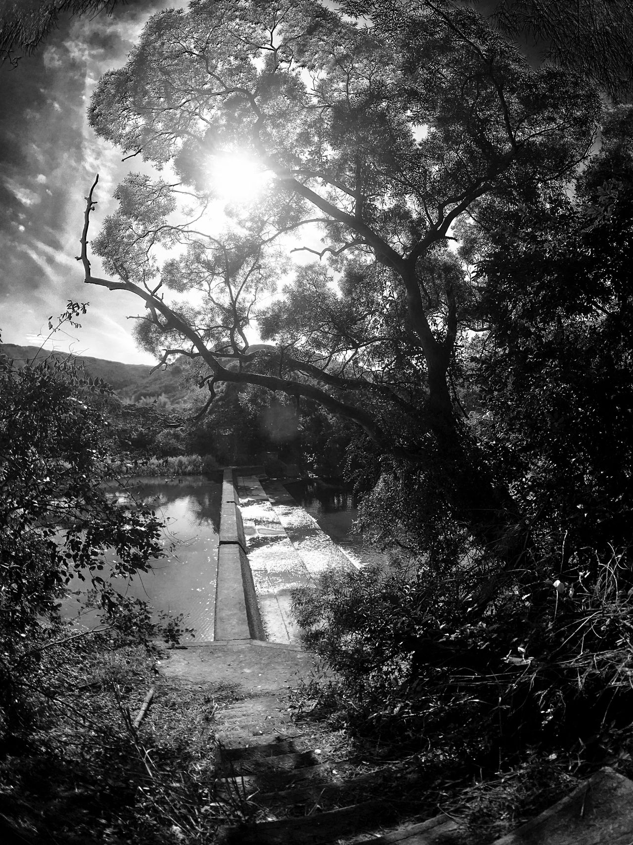 Tree Nature Tranquility Growth Outdoors Sunlight Sun Tranquil Scene Day No People Beauty In Nature Sky Branch Landscape Black & White Black And White Sun Light Through Trees Light And Shadow IPhoneography Moment Lens Superfish Landscapes Stream - Flowing Water Sunlight And Shadow Non-urban Scene