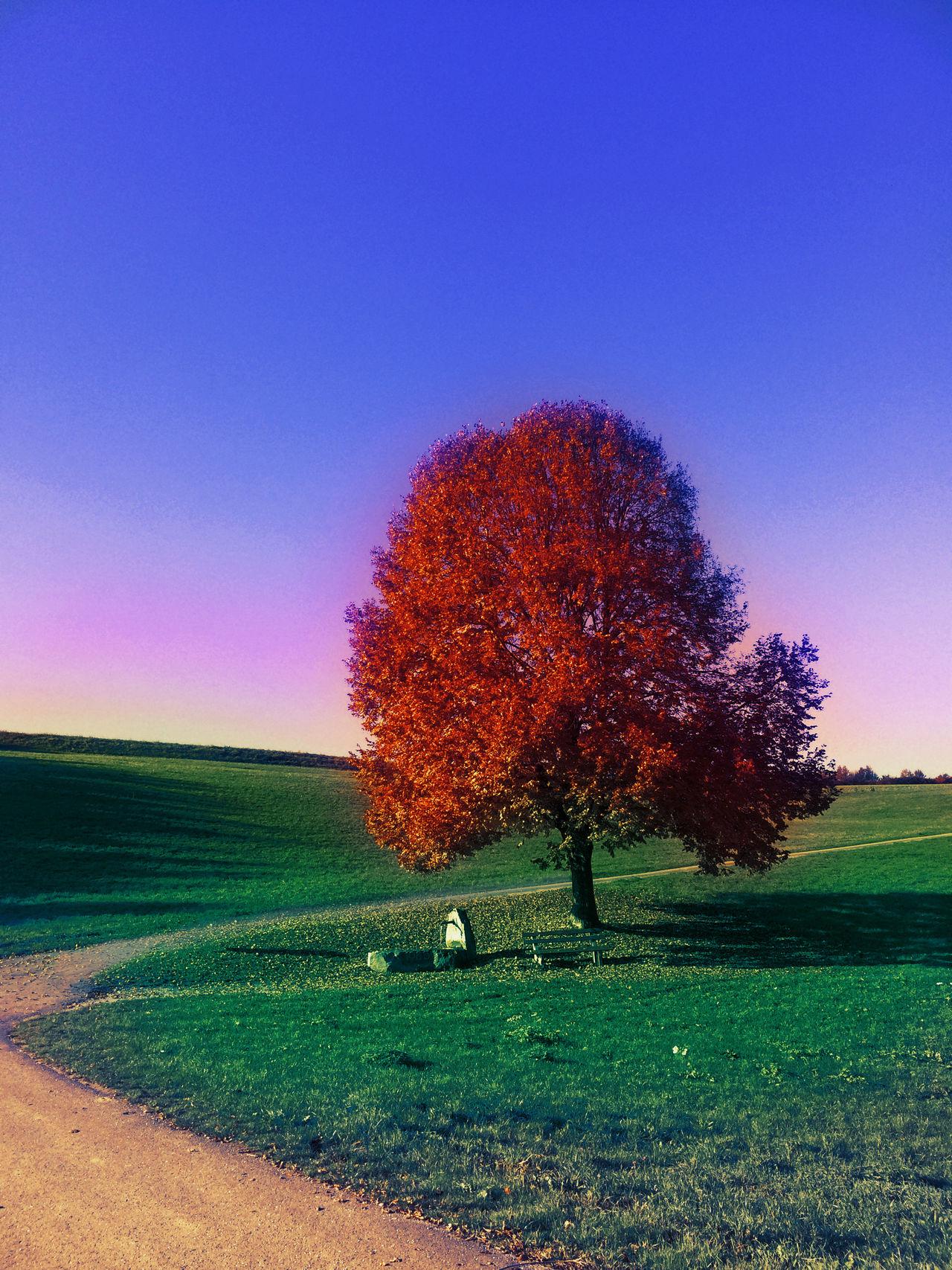Clear Sky Day Grass Landscape Nature No People Single Tree Sky Tree
