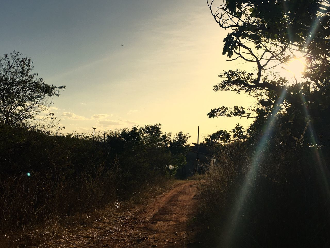 tree, the way forward, landscape, sunset, tranquil scene, diminishing perspective, nature, no people, scenics, sun, tranquility, transportation, growth, outdoors, sunlight, beauty in nature, sky, grass, road, clear sky, day