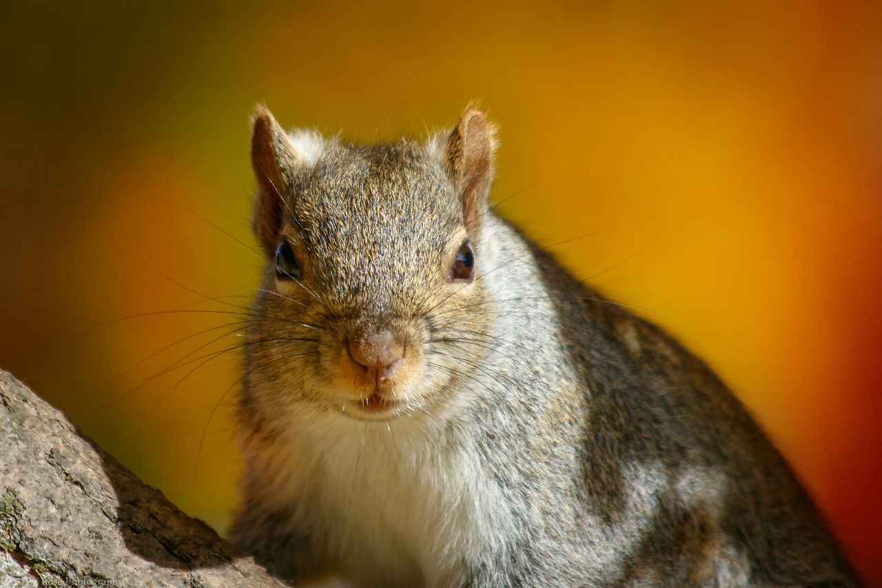 Are you talkin' to me? Squirrel Closeup Squirrel Squirrel Photo Squirrel! Nature On Your Doorstep Nature_collection Wildlife Wildlife & Nature Wildlife Photography Canon 7D MarkII Canon EF 100-400 L IS USM