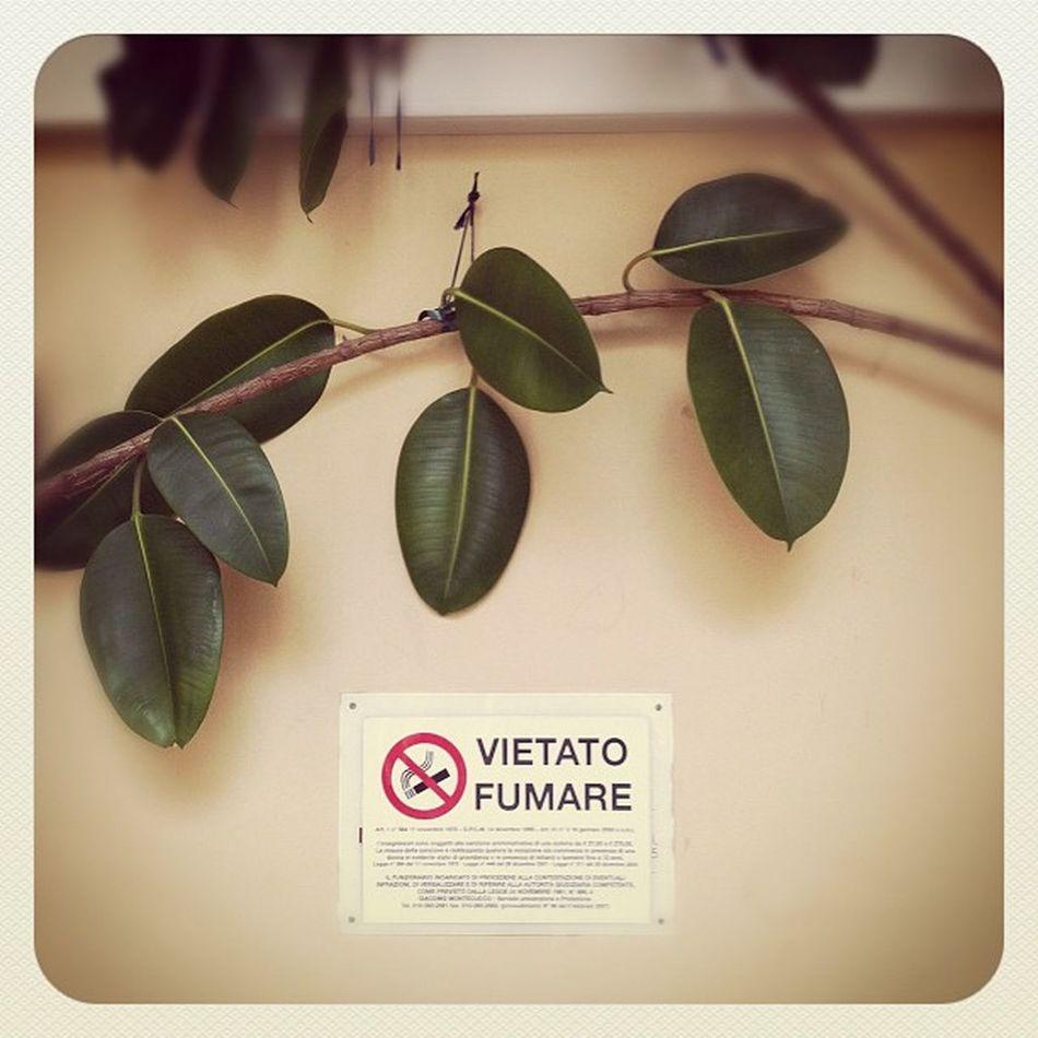 Green breath Future Instaily Photography Instagram iphonephoto photo genova green eco nature