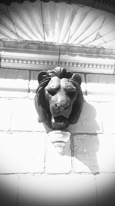 Le maître. . . . . incontestable ??? Animal Themes Animal Head  Good Vibes✌ Just For Fun From Mypointofview Just Shoot.. Streetphotography Today:-)