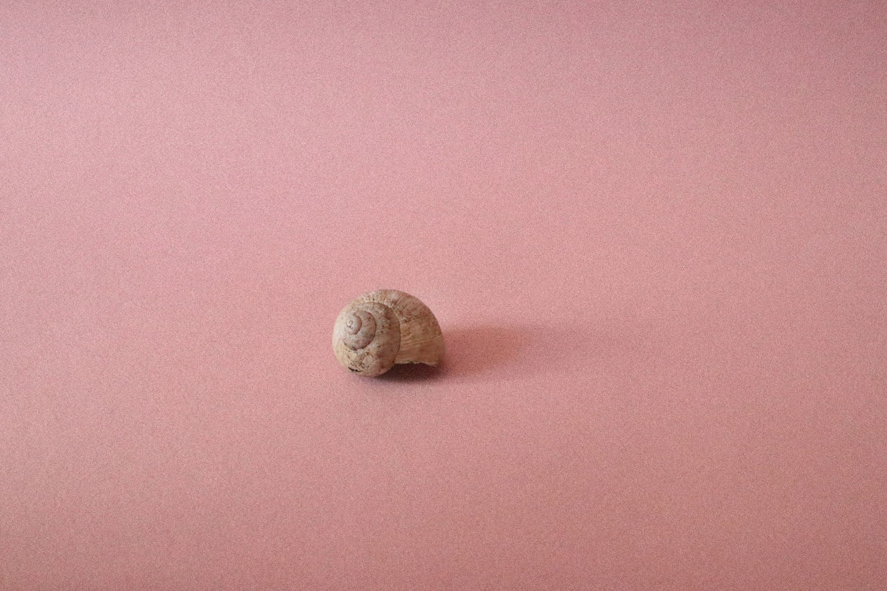 Animal Shell Animal Themes Close-up Day Gastropod Light And Shadow Nature No People One Animal Pink Background Shell Shells Snail Snail Snail Shell Snail Shells Snails Snailshell Studio Shot Millennial Pink Millennial Pink Art Is Everywhere TCPM Break The Mold (null) BYOPaper!