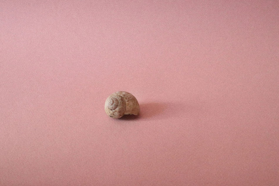 Animal Shell Animal Themes Close-up Day Gastropod Light And Shadow Nature No People One Animal Pink Background Shell Shells Snail Snail Snail Shell Snail Shells Snails Snailshell Studio Shot Millennial Pink Millennial Pink Art Is Everywhere TCPM Break The Mold