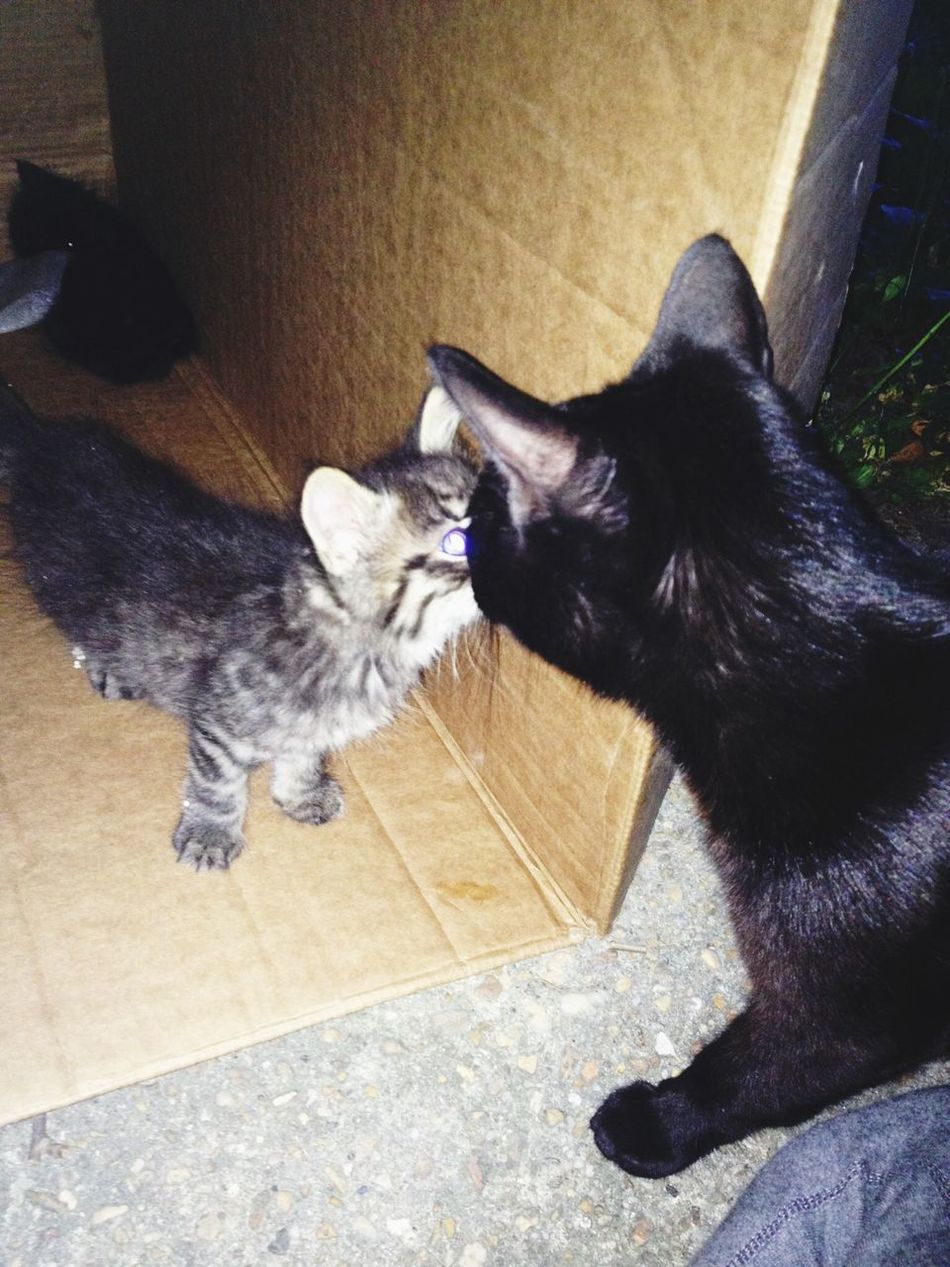 Awww. So adorable. My cat Eclipse seems to like the new stray kittens. Cats