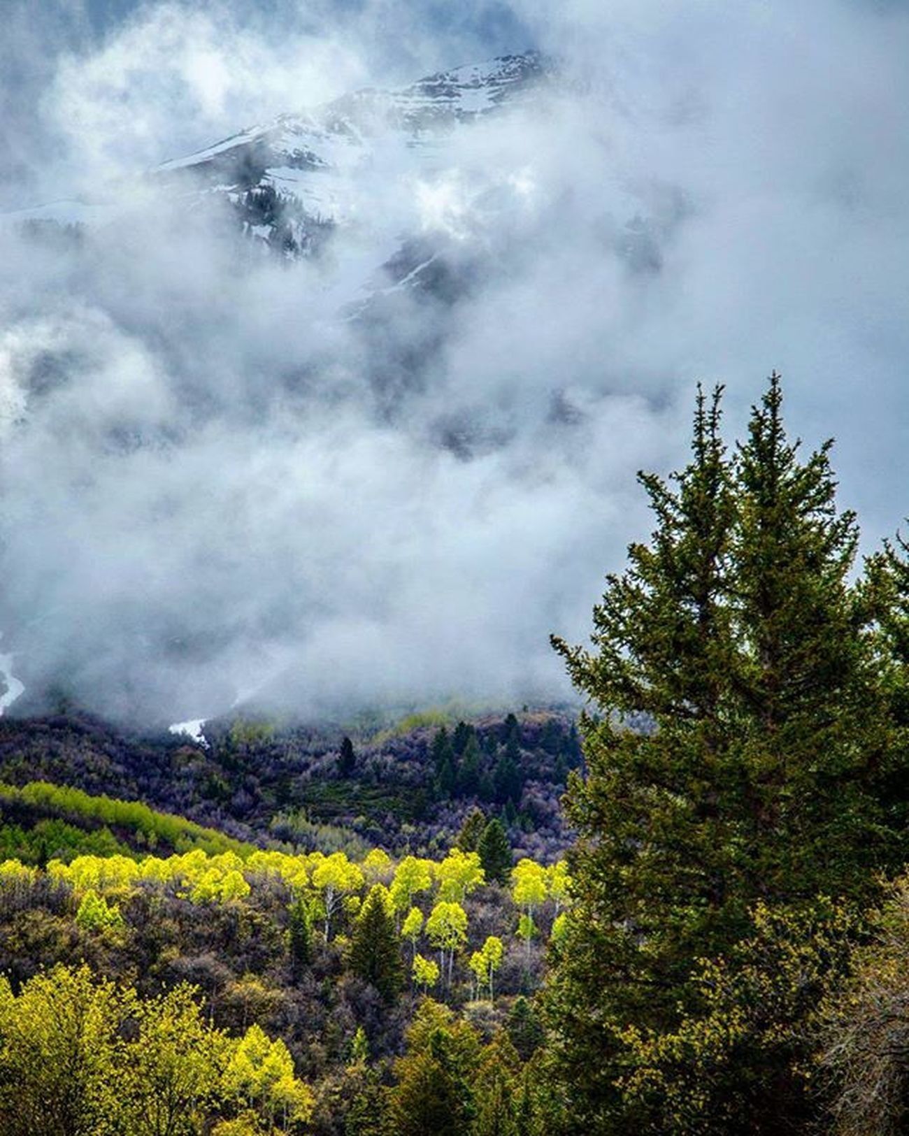 Timpanogos trying to peak through the clouds over the Aspen groves. Timpstagram Timpanogos Mountains Aspen Alpine Alpineloop Visitutah Visitutahvalley Utah