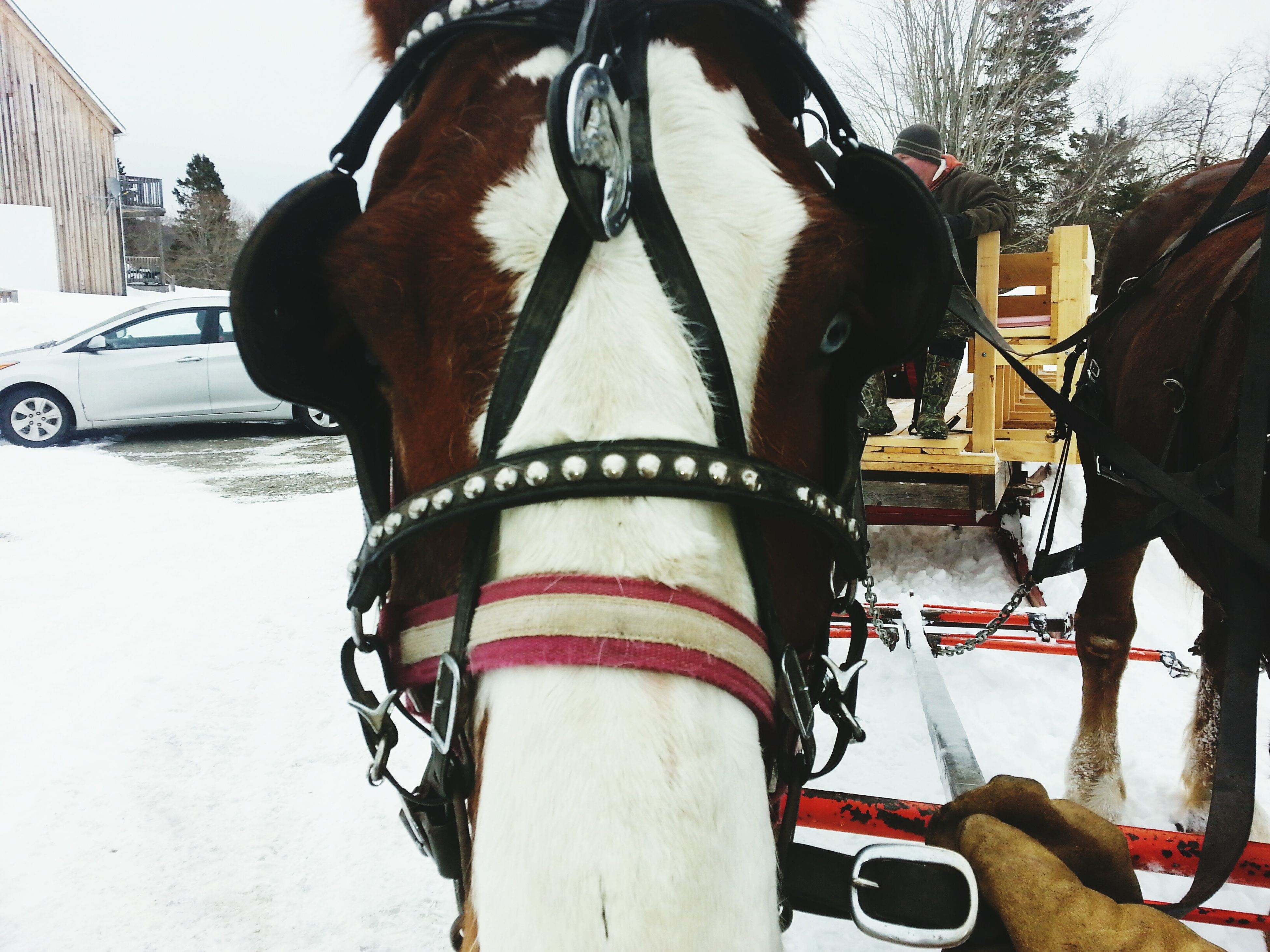 something magical within this horses eyes Horse Beautiful Nature First Eyeem Photo