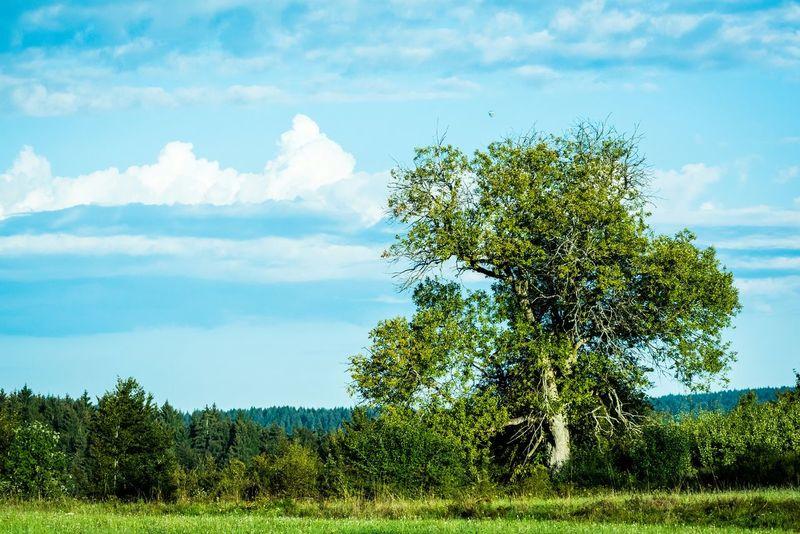 Landscape Nature Tree Taking Photos EyeEm Gallery Eye4photography  Open Edit