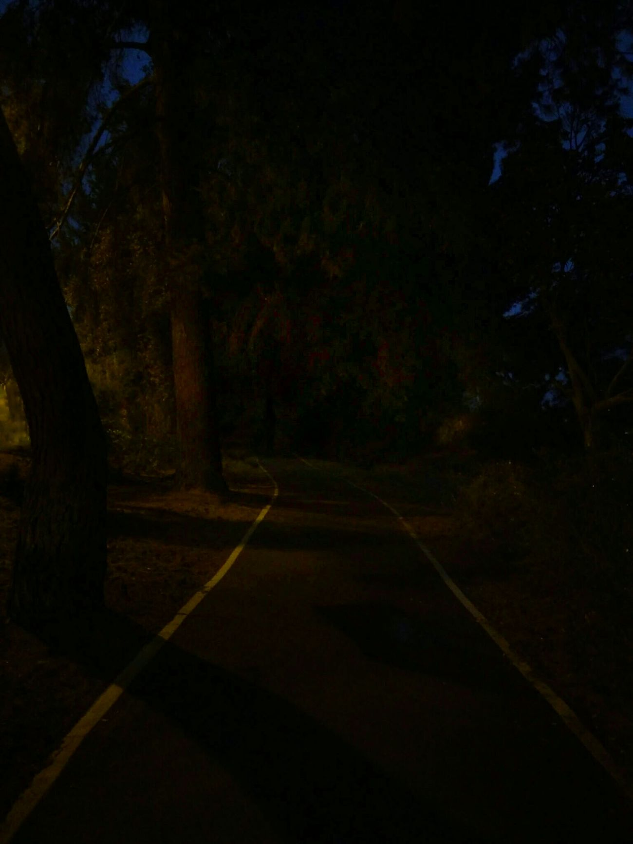 Enough flowers and jellybeans for now. Back into the darkness. Dark Path Nightcall Nightwalk Nocturne Shadow Darkness And Light Darkart Night Photography Nightphotography Nightscape Pathway Pathway, Where Will Your Foot Steps Take You? Pathway In The Forest Nighttime Darkness Dark And Light Dark Fairytale Wooded Area Woodscapes Dark Trees Mysterious Mysterious Place Dark Place Creepy Creepy Nature Shots
