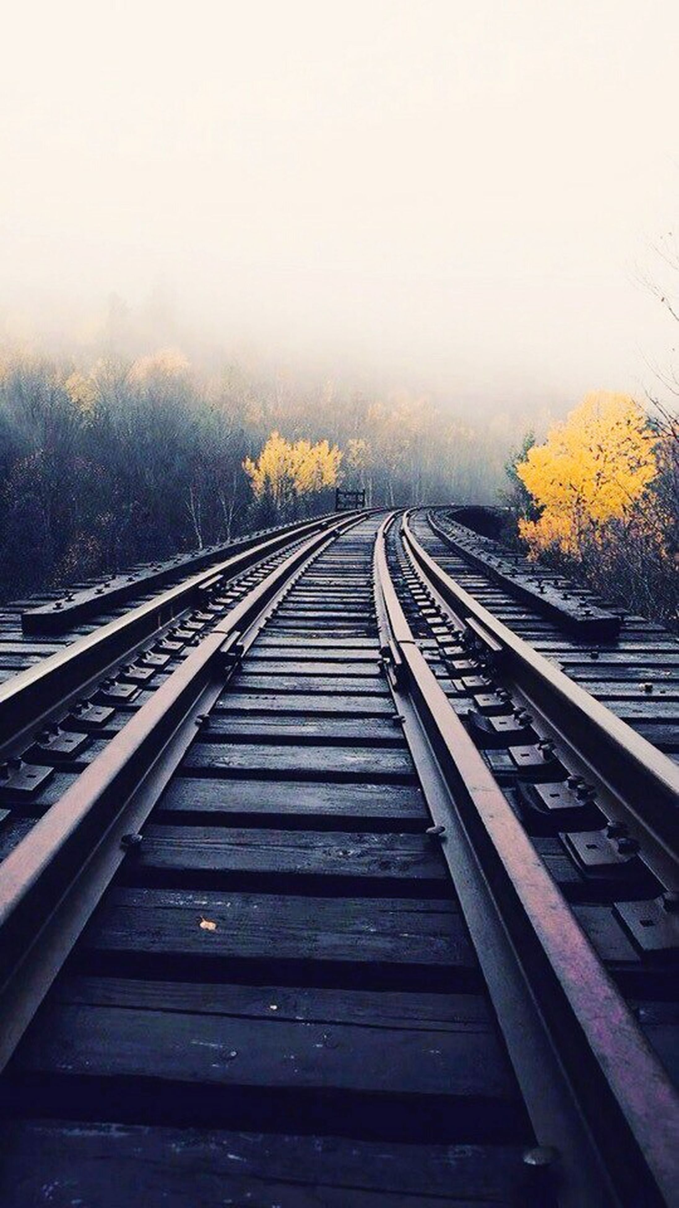 the way forward, diminishing perspective, clear sky, vanishing point, railroad track, transportation, long, connection, copy space, railing, rail transportation, sky, tranquility, footbridge, tree, tranquil scene, nature, railway track, day, straight