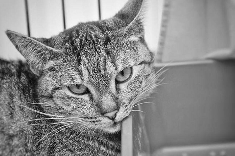 The cat🐱 Cat Annimal Nature Bw Beautiful Phographer Nikon Photooftheday Instaphoto Instadaily Czech Czechrepublic Ig_shotz Ig_nature Ig_animals Animals Marvelshots Ic_shotz Ic_bw Ig_bw Princely_shotz Cats Photo