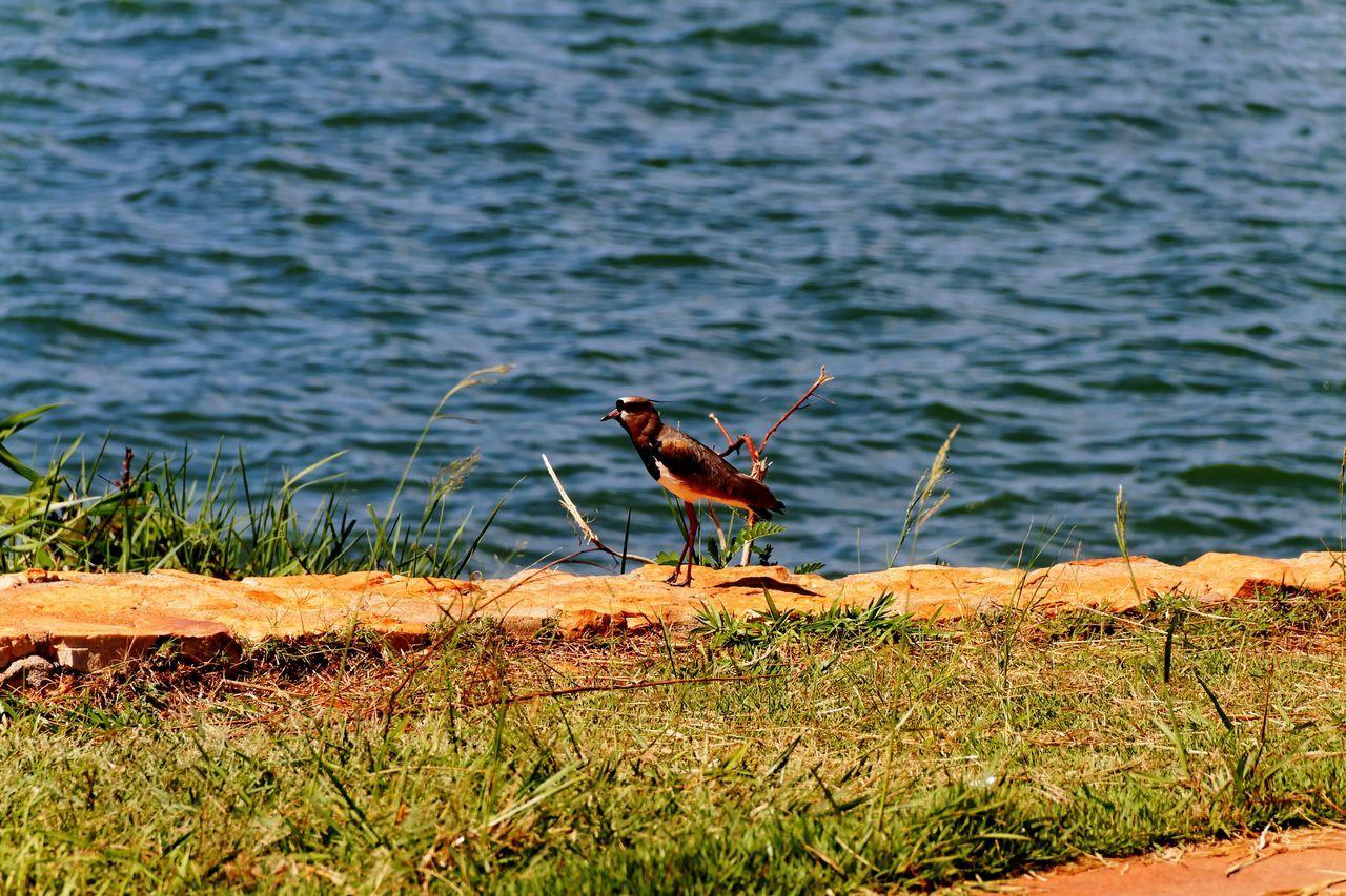 Brasilia city - Brazil Landscape_Collection Brazil - Brasília - DF Brasília - BrazilBird Photography Bird Wildlife
