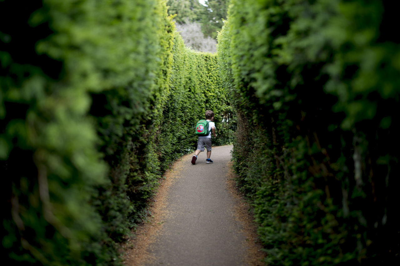 Day Full Length Growth Maze Men Nature One Person Outdoors People Plant Real People Rear View The Way Forward Tree Walking Women
