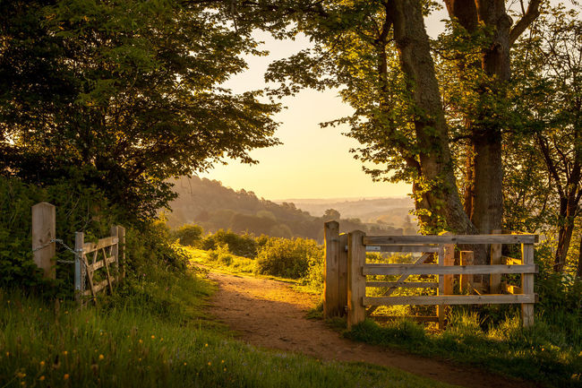 Chantry Woods Fence Gate Guildford Landscape Outdoors Rural Scene Surrey Tranquil Scene Tranquility Walking WoodLand