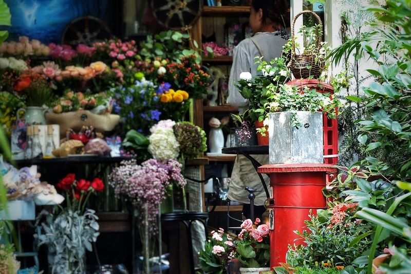Flower Plant Growth Variation Potted Plant Retail  Day Nature Freshness Outdoors Fragility No People Flower Shop Multi Colored Beauty In Nature Greenhouse Flower Market Plant Nursery Flower Head Florist