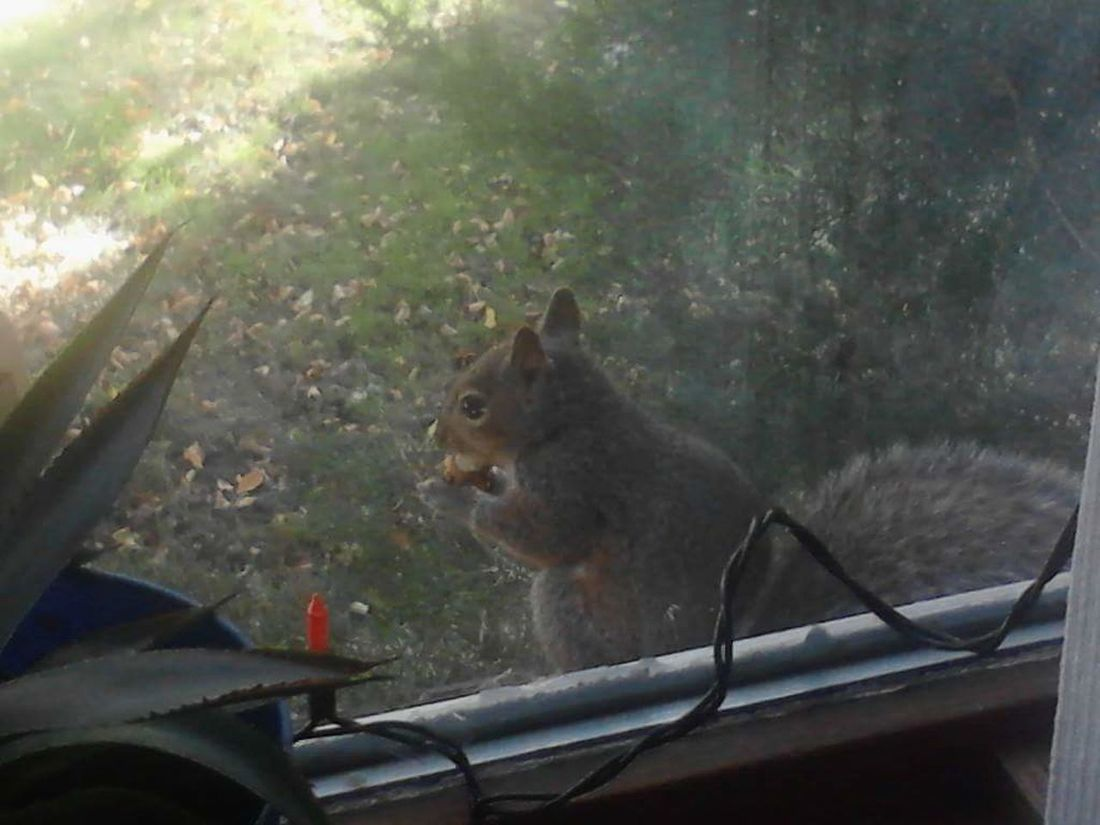 Squirrel Beauty In Nature Nature Critters Unexpected Visitor