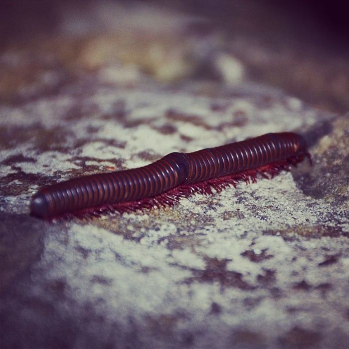 Took a while to focus in right Millipede Uglything