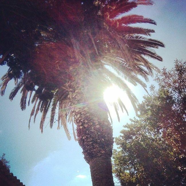Lamaddalena Sun