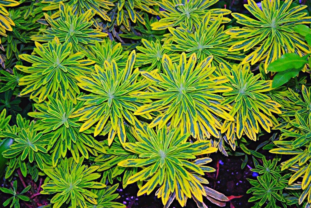 Plants Plants 🌱 Plant Plants Collection Plant Life Plantography Plant Photography Plant Lover Plantporn Plantsofinstagram Nature_collection Nature Photography Green Color Green Nature Greenhouse Green Plant
