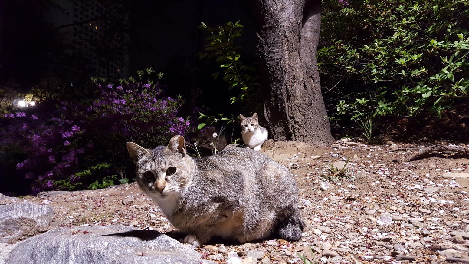 Resist Nature Animal Themes Tree Animals In The Wild Animal Wildlife No People Nightphotography Cityscape Midnight Cat & Human Lovey Cat