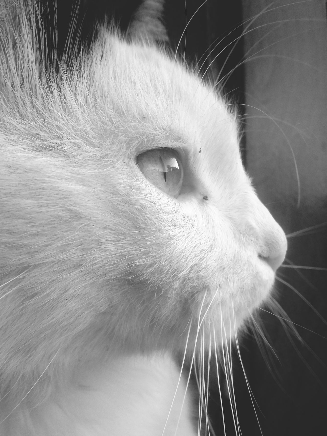 Cat Black & White Photography Face Eyes Pet Beauty Seeing The World