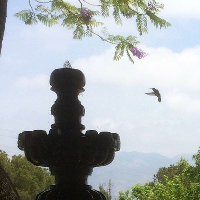 Hummingbird scoping out the Fountain