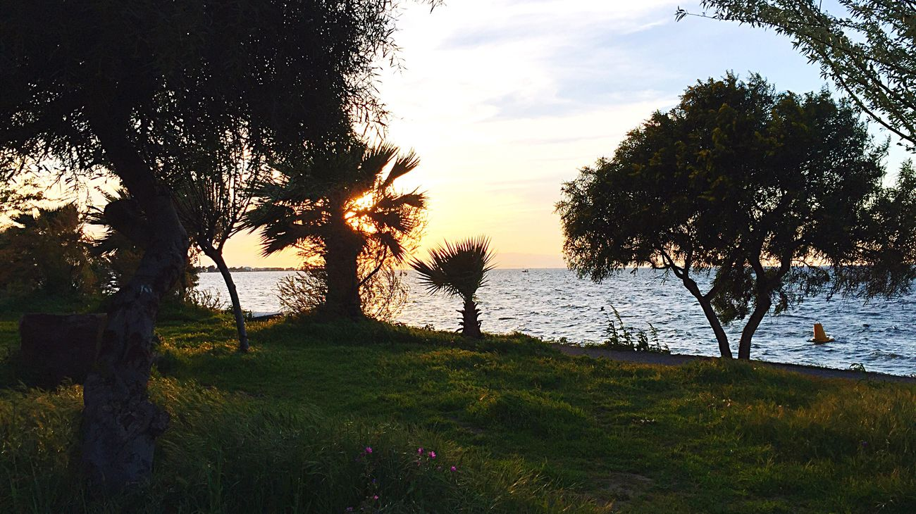 Tree Water Nature Beauty In Nature Grass Tranquil Scene Sea Sunset Sky Scenics Growth Tranquility No People Outdoors Beach Landscape Day Izmir Turkey