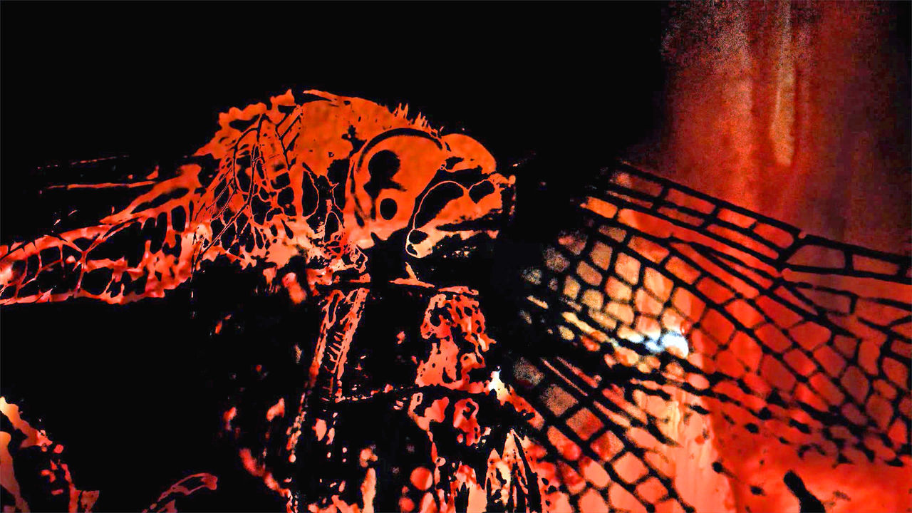ArtWork Black Background Close-up Composing Dragonfly Fire Heat - Temperature No People Red Experimental Photography Mixing Trying New Things Trying Something Different Tryingout Something New