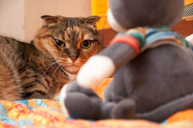 Hate you! Cats Animals Fun