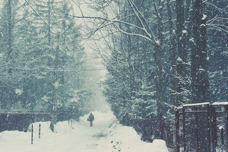 <3 Snow ❄ First Eyeem Photo