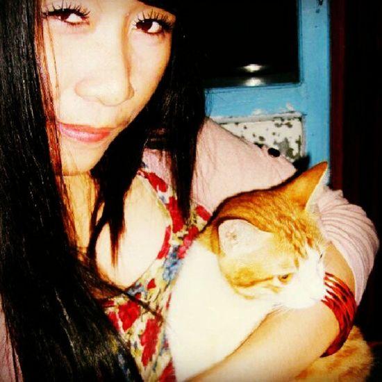 I love my cat ! All cat !! Mimik Cat Yellowcat ..