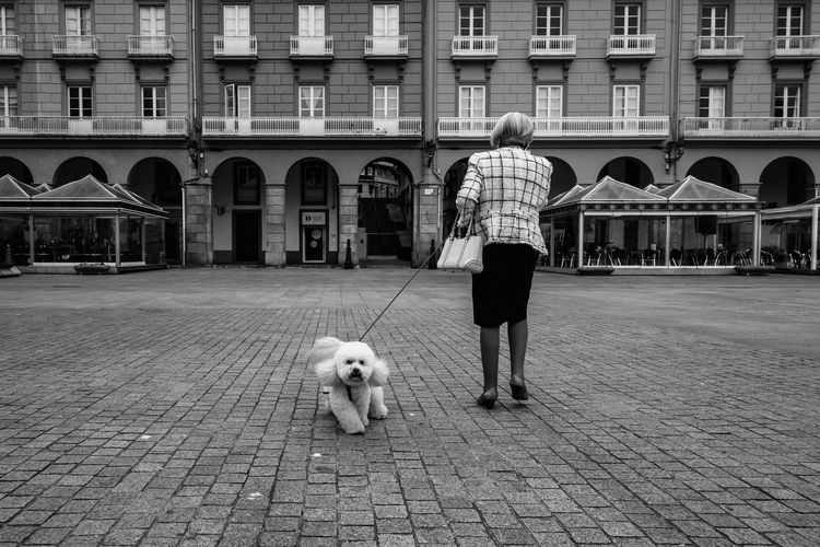 Coruña Dog EyeEm Best Shots Fuji Galicia Olloatlantico Streetphoto_bw Streetphotography Streetphotography_bw Urbanphotography VSCO Xf18 Street City City Life Bw_ Collection The Street Photographer - 2016 EyeEm Awards Up Close Street Photography Telling Stories Differently Leisure Activity