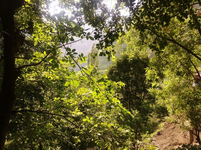 EyeEmNewHere Tree Nature Growth Branch Low Angle View Beauty In Nature Forest Green Color Day Outdoors No People Leaf Sky Freshness