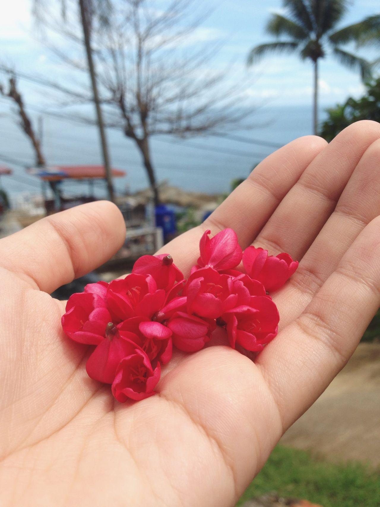 🌸🌸🌸 Red Flowers Beach Beachphotography NaiharnBeach Phuket Phuket,Thailand Ontherock