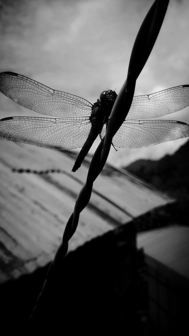 ITs..onLY ...A...DreaM..... Dragonfly_of_the_day Life's Simple Pleasures... Nature On Your Doorstep Nature's Diversities Unknown Journey My Collection... Photography Is My Escape From Reality! Black And White Collection  Black And White Photography Just Another Day Alone Alonetime Loneliness Monochrome Photography
