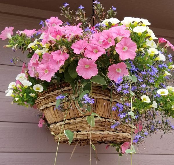 Flower Plant Fragility Purple Nature Beauty In Nature Growth Pink Color Multi Colored Flower Head No People Outdoors Day Freshness Basket Of Flowers 🌷