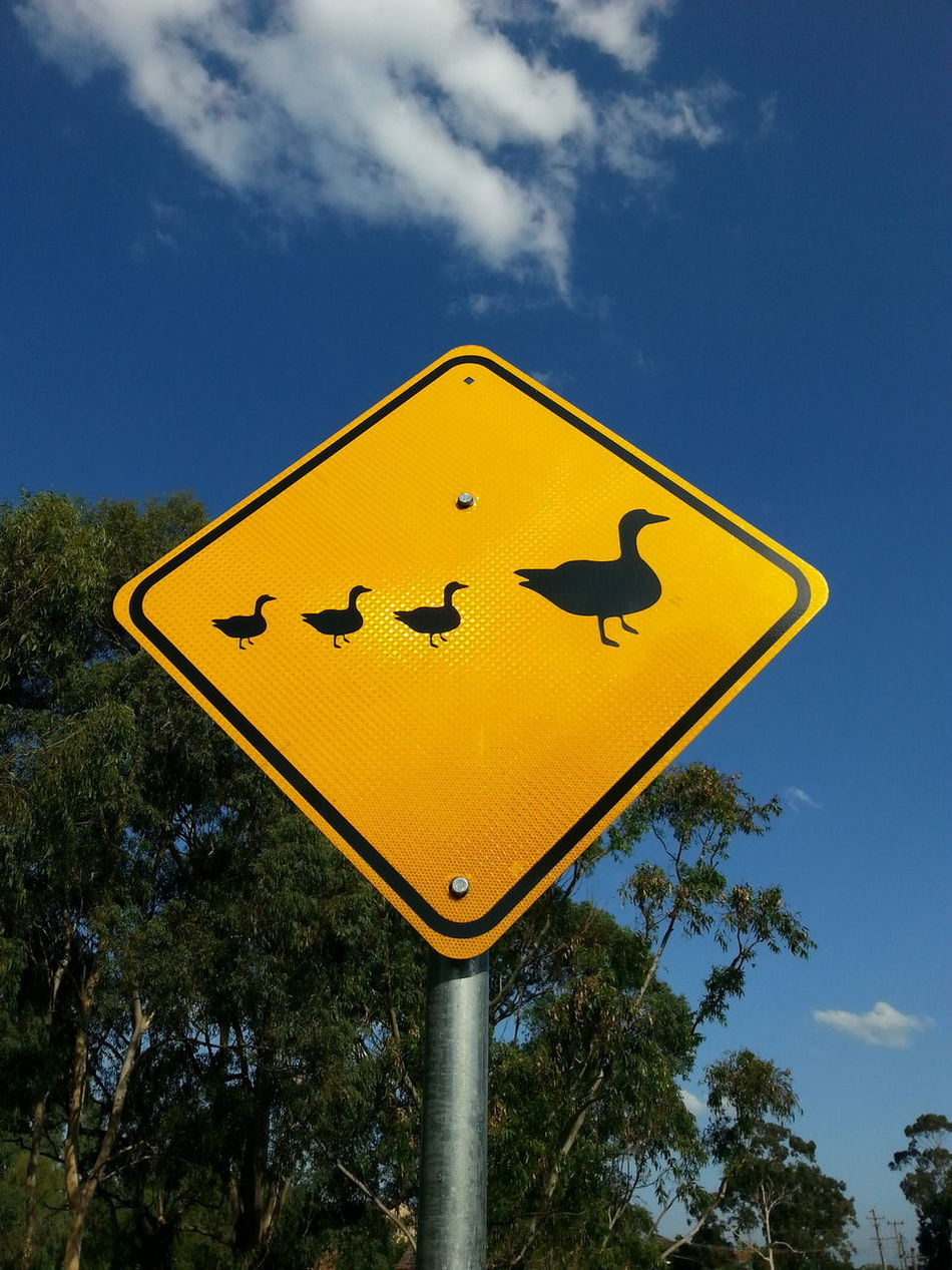 three little ducks went out one day Blue Sky Bright Sunshine Communication Day Diamond Shaped Drive Carefully Duck Ducklings Ducks Mother Duck PhonePhotography Road Sign Semiotics Sign Signs Signstalkers Silhouette Sky Smartphonephotography Street Sign Street Signage Street Signs The Purist (no Edit, No Filter) Tree Yellow